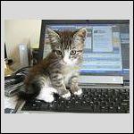 2064354_com_catlapto.jpg